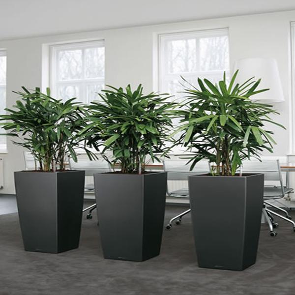 Các loại cây cảnh trồng trong nhà4
