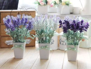 cách trồng hoa oải hương bằng hạt giống