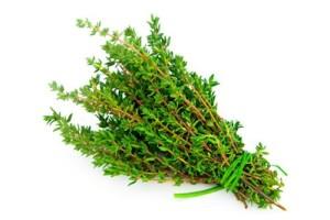 cách trồng cỏ xạ hương