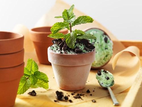 cách trồng và chăm sóc cây bạc hà
