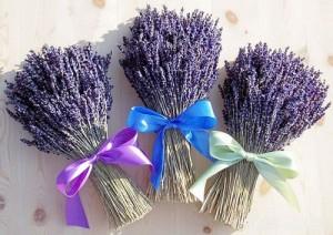giá hoa oải hương