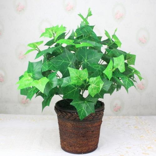 Cách trồng và chăm sóc cây thường xuân1