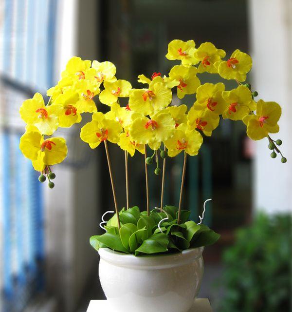 hoa lan hồ điệp vàng3