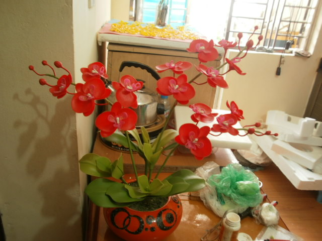 hoa lan hồ điệp đỏ3