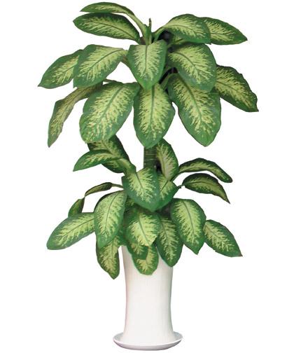 những loại cây thanh lọc không khí trong nhà van-nien-thanh