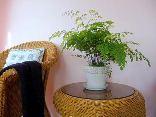 ý nghĩa cây dương xỉ trong phong thủy