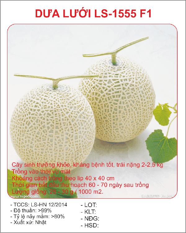 Cách ươm trồng hạt giống dưa lưới LS - 1555 F11