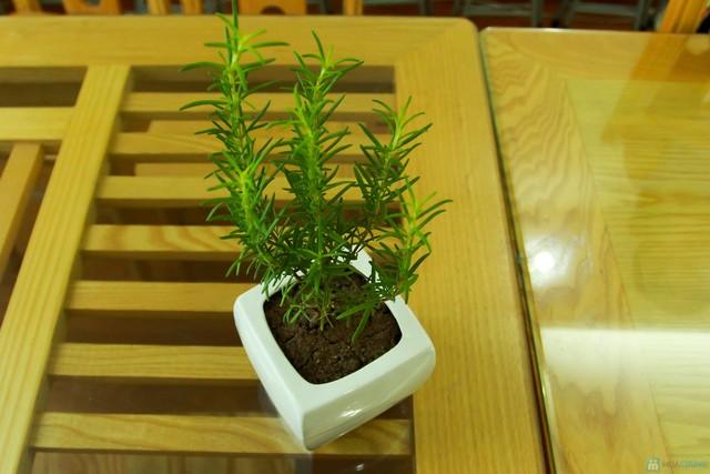 cây hương thảo là gì2