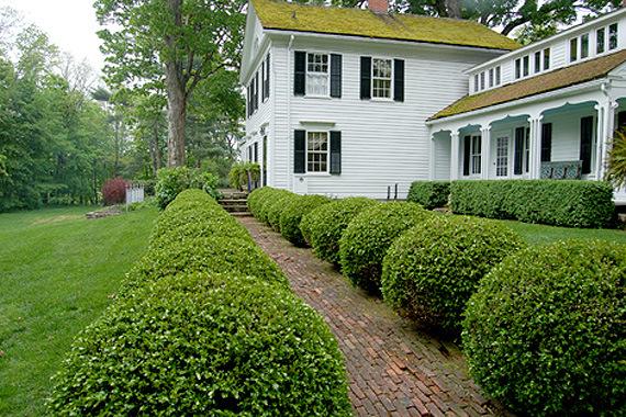 Hướng dẫn cách trồng và chăm sóc cây ắc ó