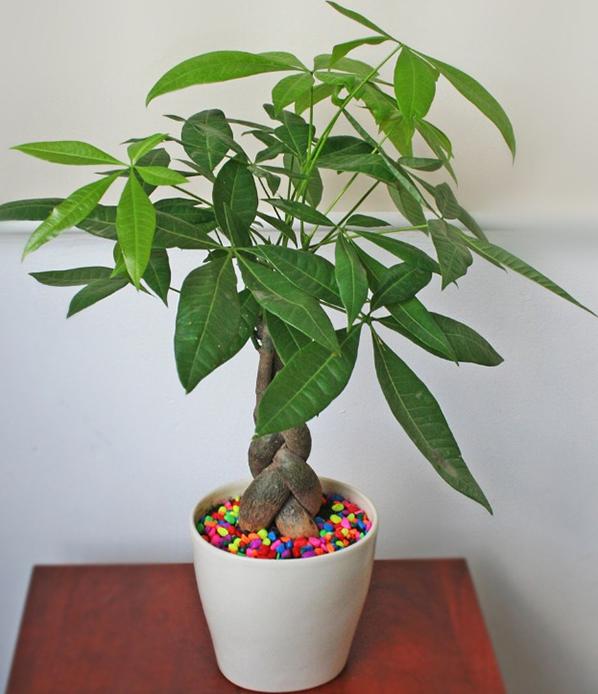 loại cây trồng phù hợp phong thủy cho 12 con giáp.12