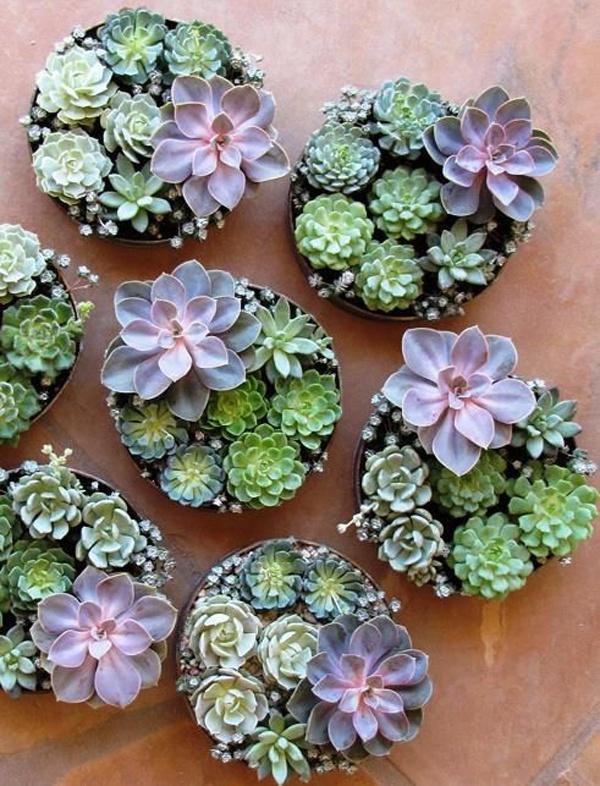 Loại cây trồng phù hợp phong thủy cho 12 con giáp4
