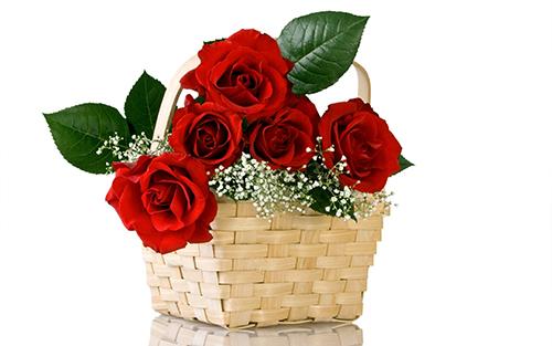 thơ về hoa hồng2
