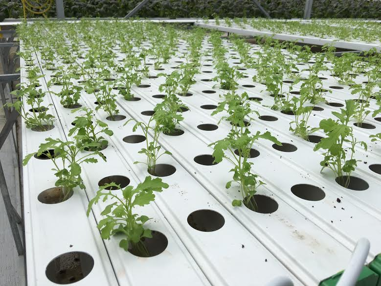 ống trồng cây pvc 2