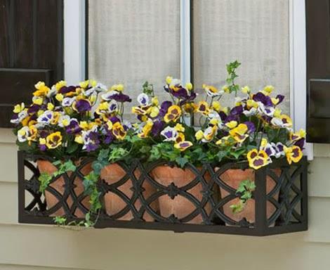 Mê mẩn với hoa păng xê đầy sắc màu