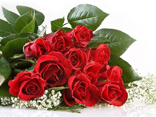 thơ về hoa hồng4