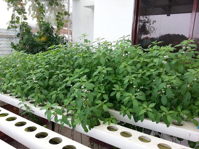 ống trồng cây pvc3