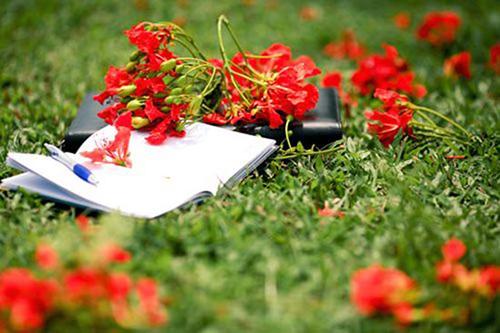 thơ về hoa phượng4