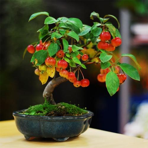 cây ăn quả mini đẹp1