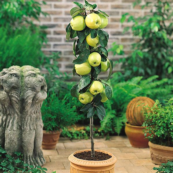 cây ăn quả mini đẹp5