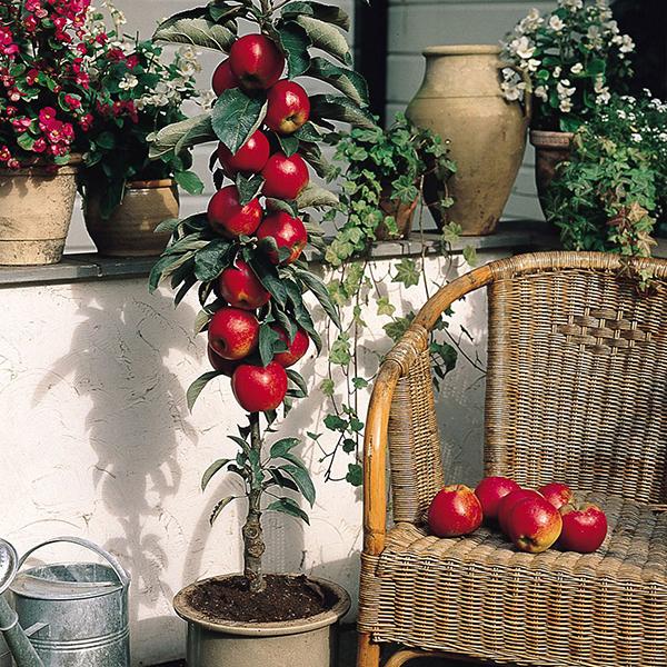 cây ăn quả mini đẹp3