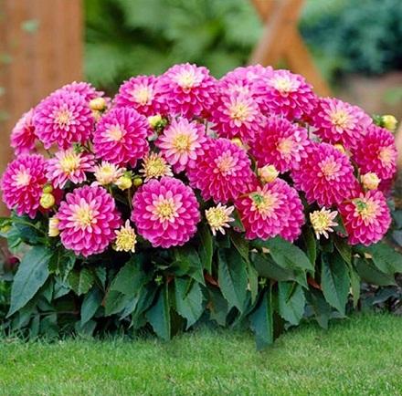 hoa tổ ong1