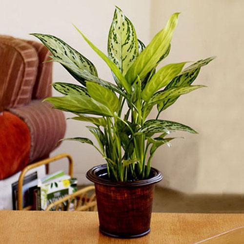 cây trồng trong phòng khách1