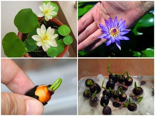 hạt giống hoa1