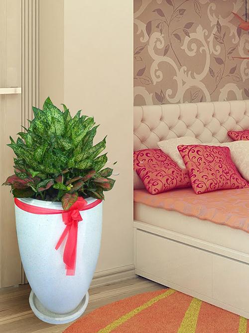 cây trồng trong phòng khách4