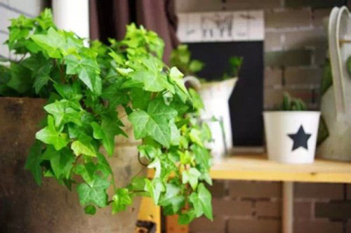 cây trồng trong phòng khách5