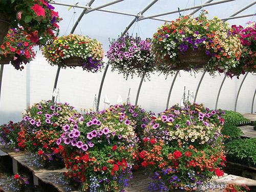 giống hoa dễ trồng 1