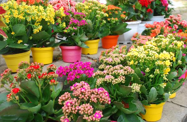 hoa sống đời 1