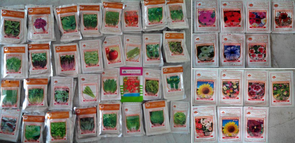hạt giống hoa5