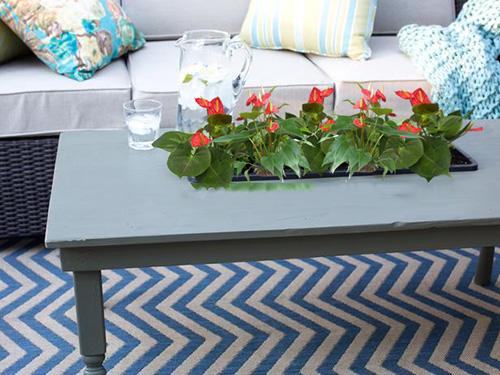 cây trồng trong phòng khách6