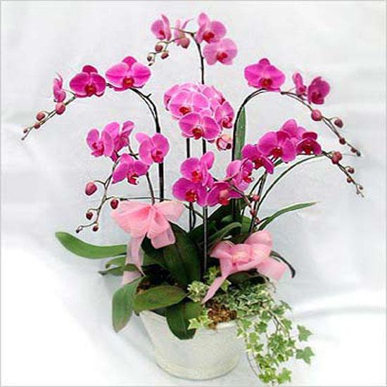 Những loài hoa đẹp dành tặng thầy cô ngày 20/11