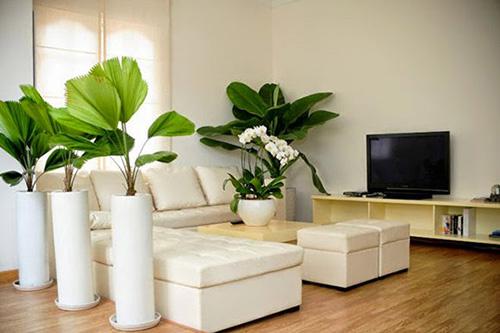 cây trồng trong phòng khách7