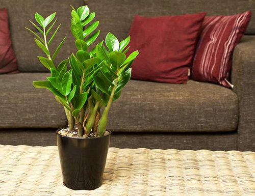 cây trồng trong phòng khách9