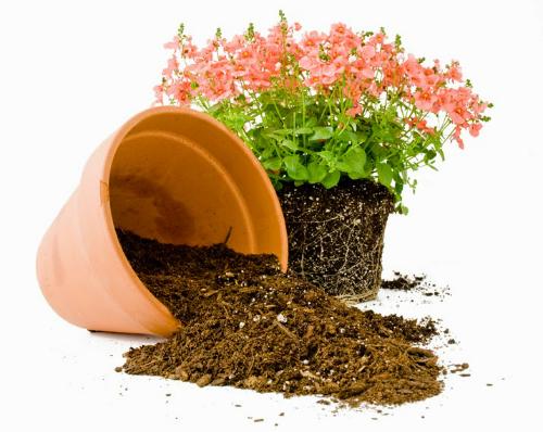 Hướng dẫn dùng đất sạch để trồng cây cảnh