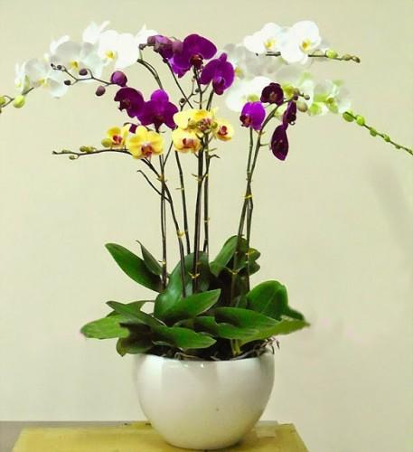 5 loại hoa đẹp dành tặng thầy cô ngày nhà giáo