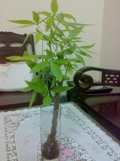 Kiến thức dùng dung dịch thủy canh để trồng cây