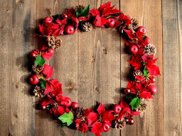 Hoa trạng nguyên báo hiệu mùa giáng sinh