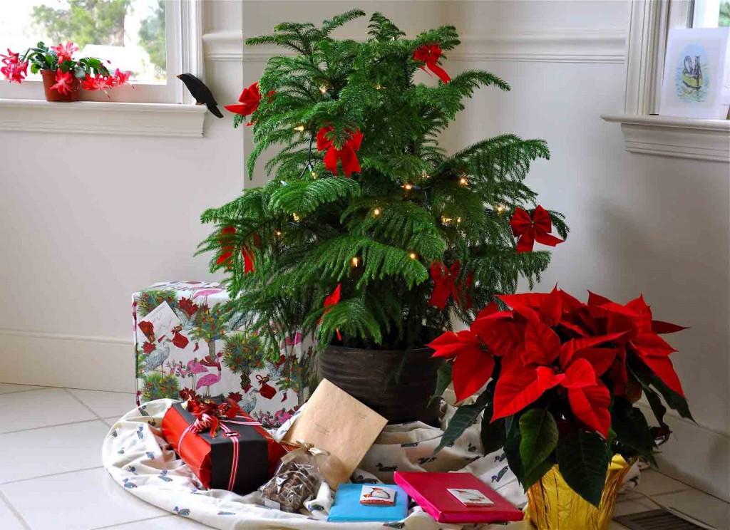 Chọn cây cảnh làm quà giáng sinh năm 2016
