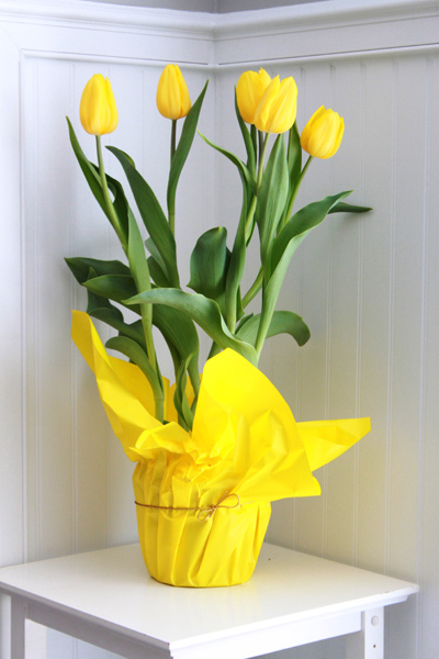 Chậu hoa Tulip chưng tết giá rẻ