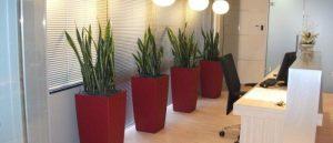 Il-verde-in-ufficio-con-le-piante-autosufficienti-700x300