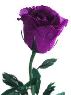 ban-hoa-hong-violet