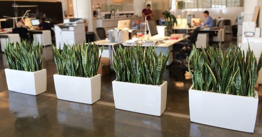 comprar-plantas-de-interior-oficina-florestore